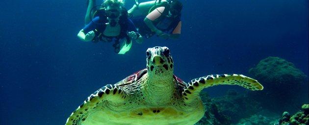 Dykning for Jysk mallorca