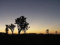 Joshua Tree Nationalpark.