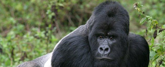 Rejser til Rwanda - bestil et tilbud her | Jysk Rejsebureau