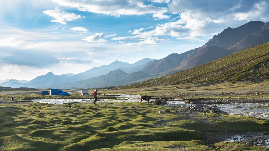 Nimaling Camp, Markha Valley trek, Ladakh, Indien