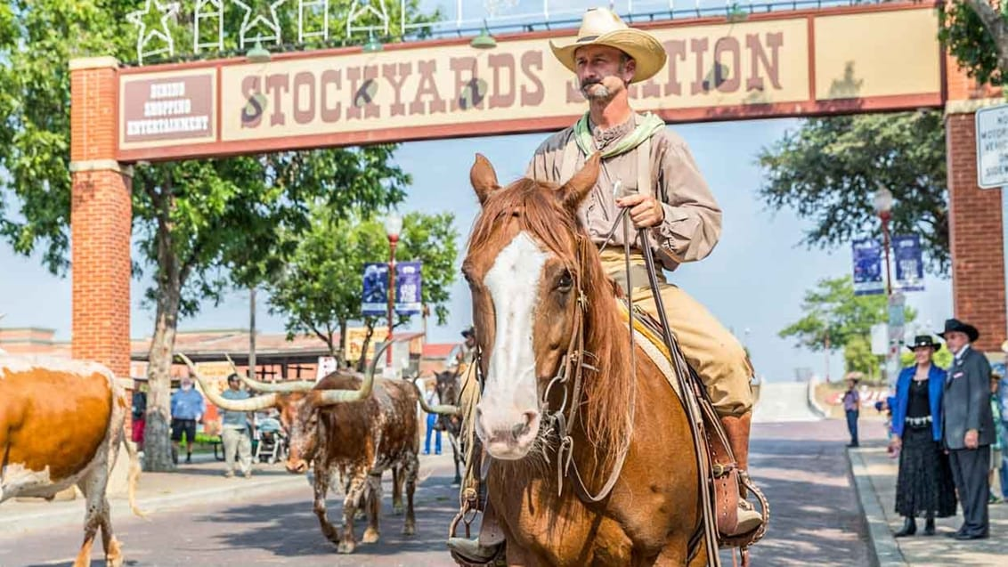 I The Stockyards (Fort Worth) drives der hver morgen og hver eftermiddag en flok Texas-longhorn-kvæg op og ned ad hovedgaden